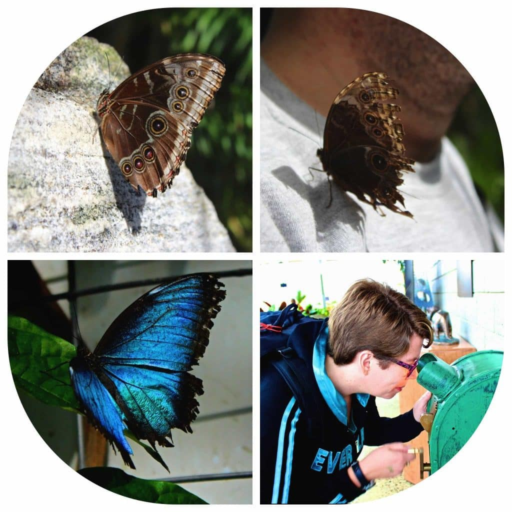 Experiment at Butterfly Conservatory