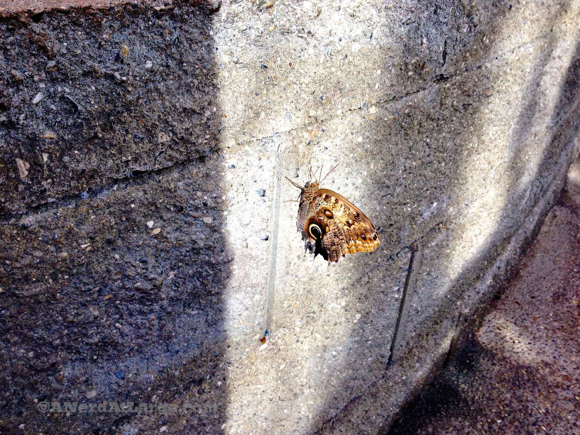 Pacific Science Center butterfly wall