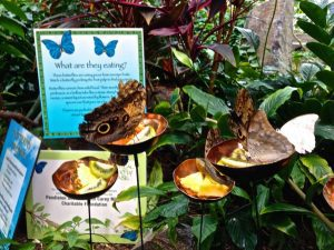 Pacific Science Center what do butterflies eat